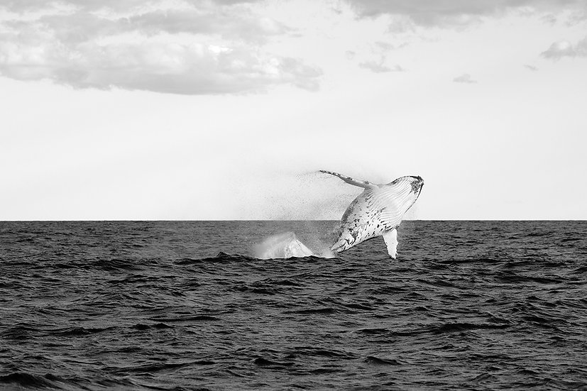 Whale #4