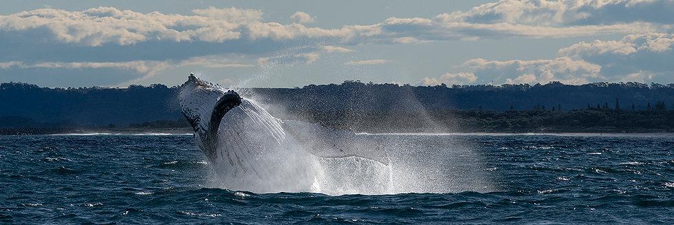 Whale #20