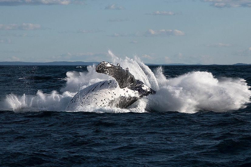 Whale #18