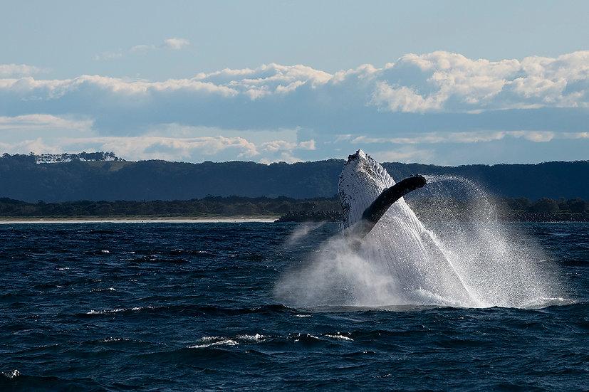 Whale #14