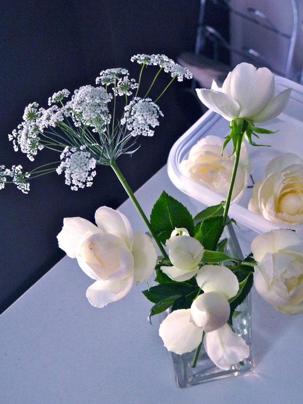 rosalia3.jpg
