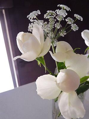 rosalia1.jpg