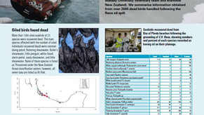 Insights from the Rena Disaster