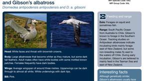 A Fishers Guide to NZ Coastal Seabirds