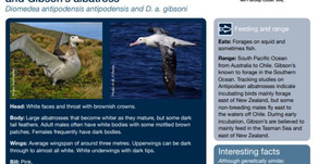 A Fishers Guide to NZ Coastal Seabirds