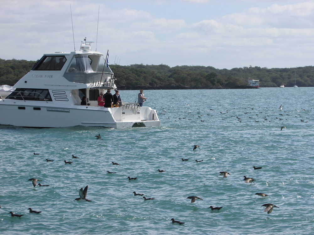 Recreational fishing around seabirds