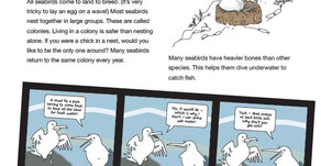 Seabird Activity Book