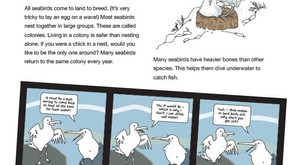 Seabird Activity Book