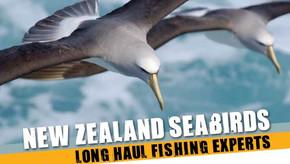 Seabirds, Longhaul Fishing Experts