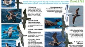 Hauraki Gulf Seabirds