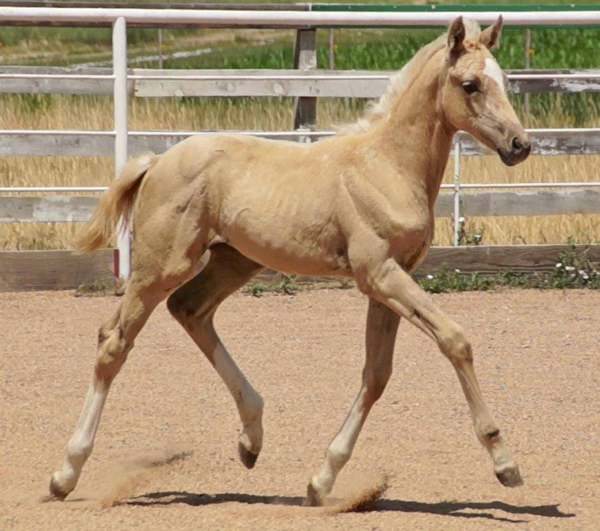 2013 filly Poetry.jpg