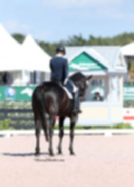 Bock Dressage, Dutch stallion Parcival