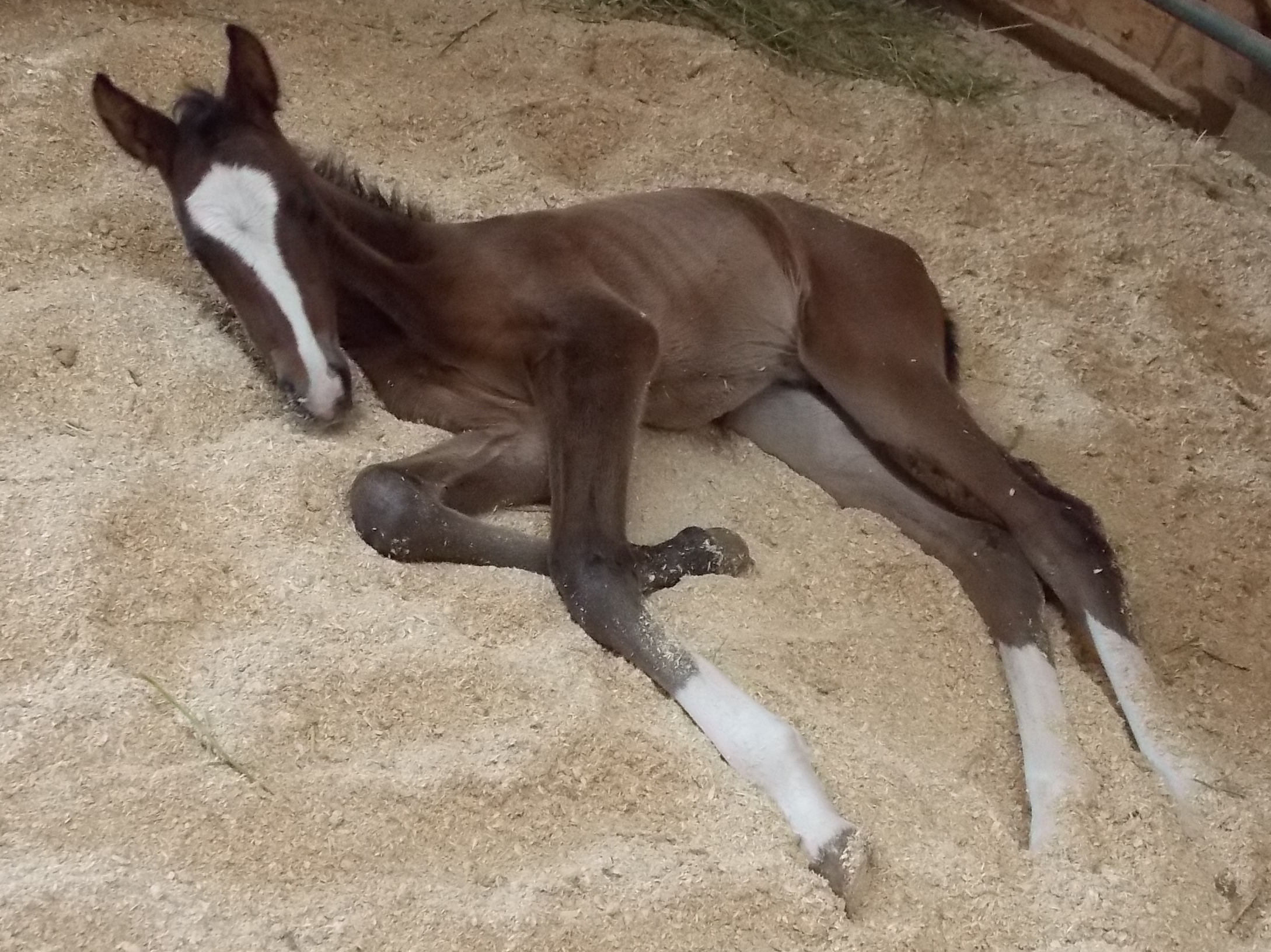 2013 Filly out of BWP Godiva.jpg