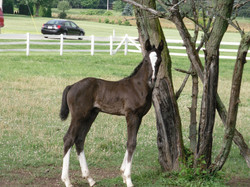 2010Filly-Pattersonmare.jpg