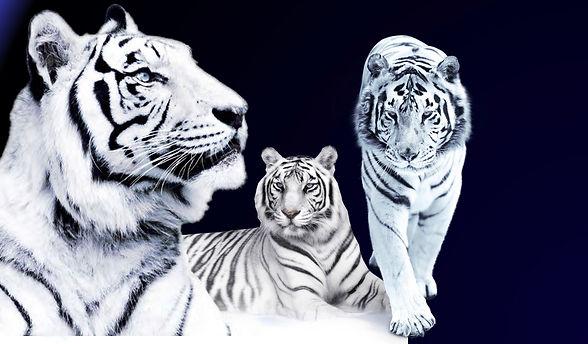 jee tiger.jpg