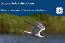 Oiseaux de la Loire à Tours