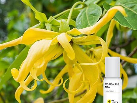 일랑일랑 오일이 함유되어 있어 향수퍼럼 바르는 파스 오일 닥터유스 아로마, Dr.YOUTH Aroma Roll-on Oil made with Ylang Ylang Oil.