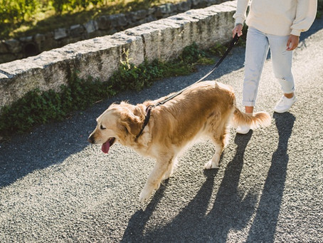 Bring Dr.YOUTH Aroma Roll-on Oil when you go for dog walking!
