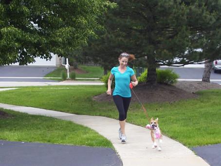 강아지와 산책 전후로 바르면 너무 편안해지는 닥터유스 아로마롤온 천연오일!