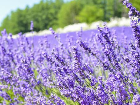 라벤더오일이 함유되어있어, 힐링을 도와주는 닥터유스! The natural ingredient of Dr.YOUTH Aroma Roll-on Oil is Lavender.