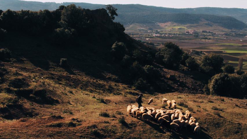 Santiago the shepherd, Fez