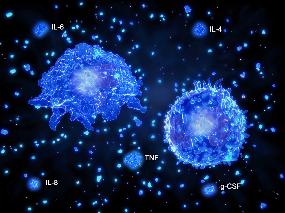 By Scientific Animations