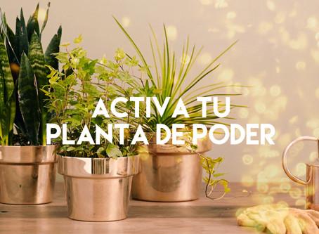 Activa tu Planta de Poder