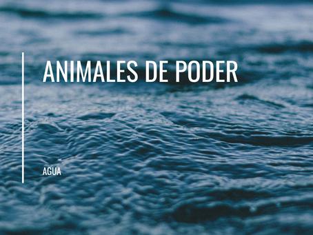 Animales de poder | Elemento Agua