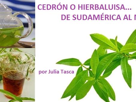 CEDRÓN O HIERBALUISA, DE SUDAMERICA AL MUNDO!