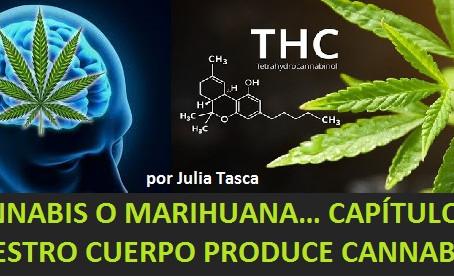 CANNABIS O MARIHUANA… CAPÍTULO 2: NUESTRO CUERPO PRODUCE CANNABIS!