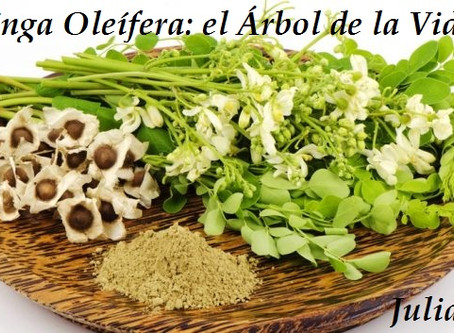 "PLANTAS ADAPTÓGENAS (tercera parte): MORINGA OLEÍFERA, EL ""ARBOL DE LA VIDA"""