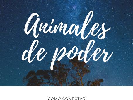 Animales de poder | Como conectar