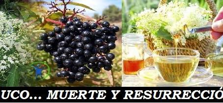 SAUCO: MUERTE Y RESURRECCIÓN!