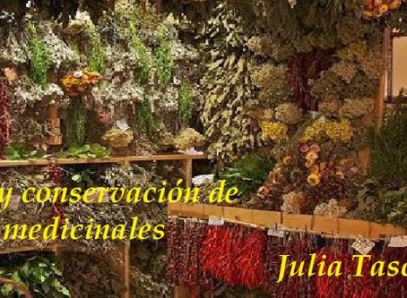 SECADO Y CONSERVACIÓN DE HIERBAS MEDICINALES