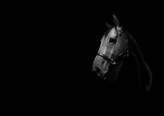 caballo workflow.jpg