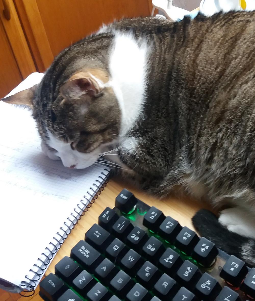 Cat sleeping on the job. Stops trading, stops managing the portfolio.