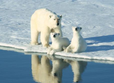 Nei til oljeleting i Barentshavet!