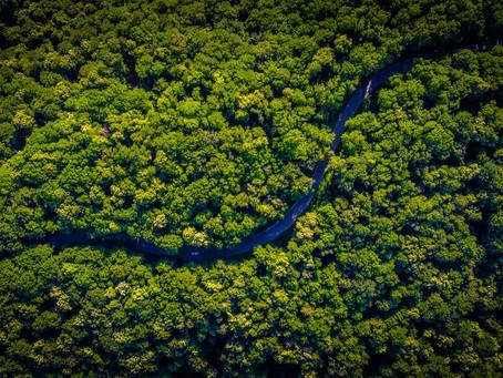 Stans avskogingen av regnskogene nå!