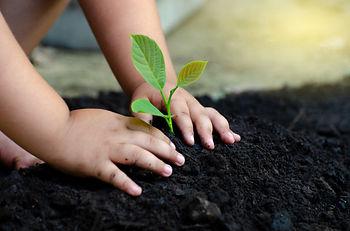 tree-sapling-baby-hand-dark-ground-conce