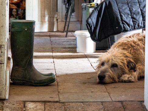 pet photography meath, irish wolfhound, brittas estate nobber, pawtrait, pet photographer ireland, dog photographer ireland