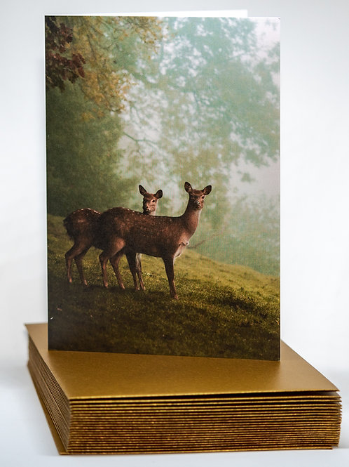 Two Sika