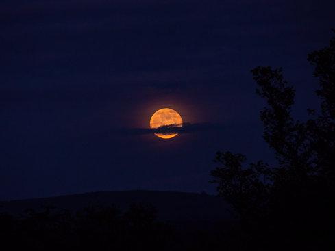Flower Moon, Nobber, Meath