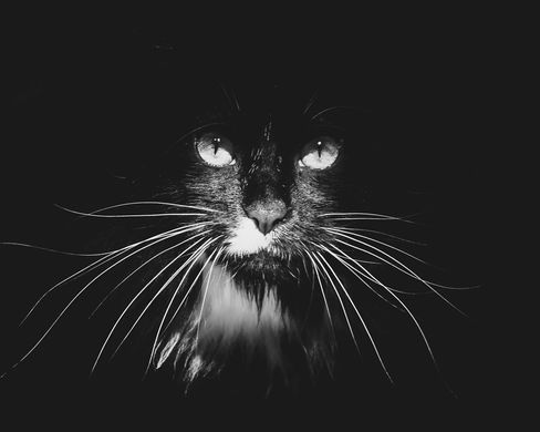 pet photography meath, cute cat, fluffy cat, rescue cat meath, pawtrait, pet photographer ireland, cat photographer ireland