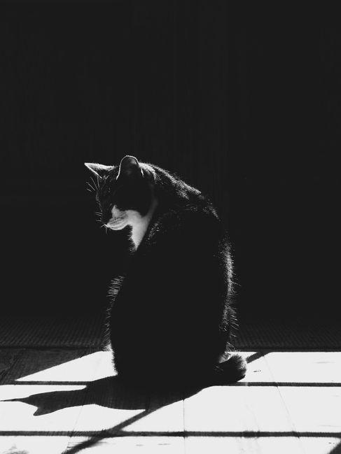 pet photography meath, cute cat, rescue cat meath, pawtrait, pet photographer ireland, cat photographer ireland, black and white cat photo