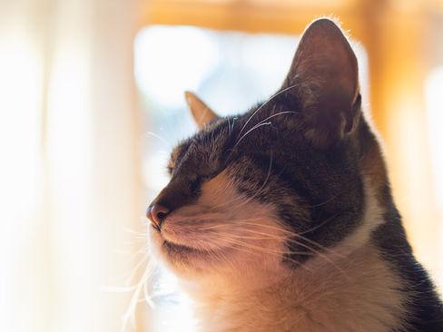 pet photography meath, cute cat, rescue cat meath, pawtrait, pet photographer ireland, cat photographer ireland