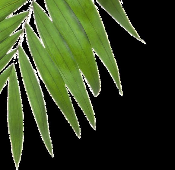 Palm%252520Tree%252520Leaves_edited_edit