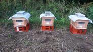 いよいよ養蜂(はちみつ取り)を始めます!