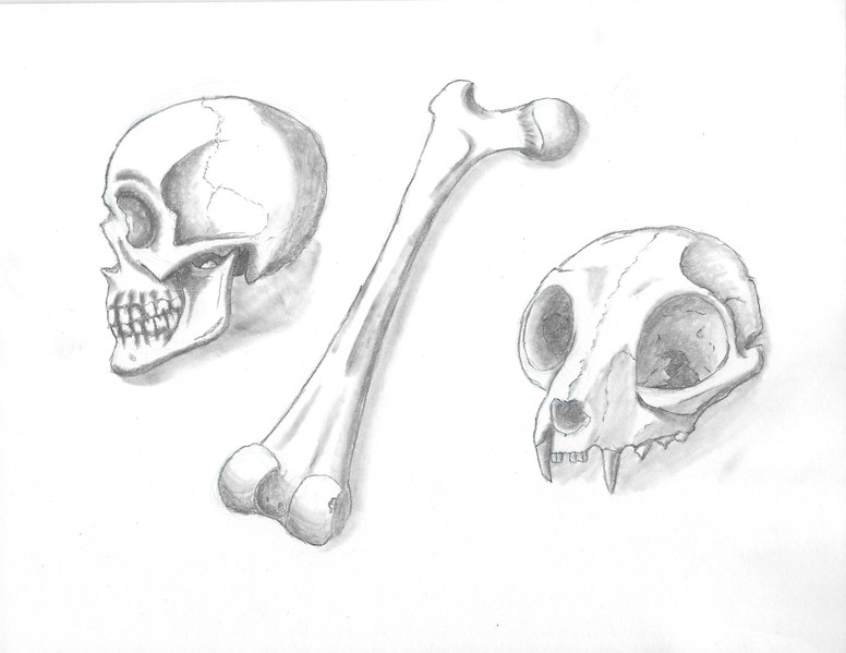 Rendered 3d Bone