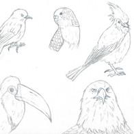 Animal Study 2