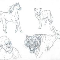 Animal Study 1